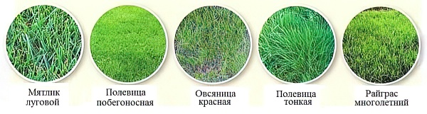 Газон на даче: как правильно сделать своими руками, пошаговая инструкция посадки газонной травы, поэтапное обустройство на участке с фото