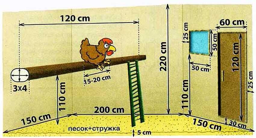 Устройство курятника внутри на 20 кур