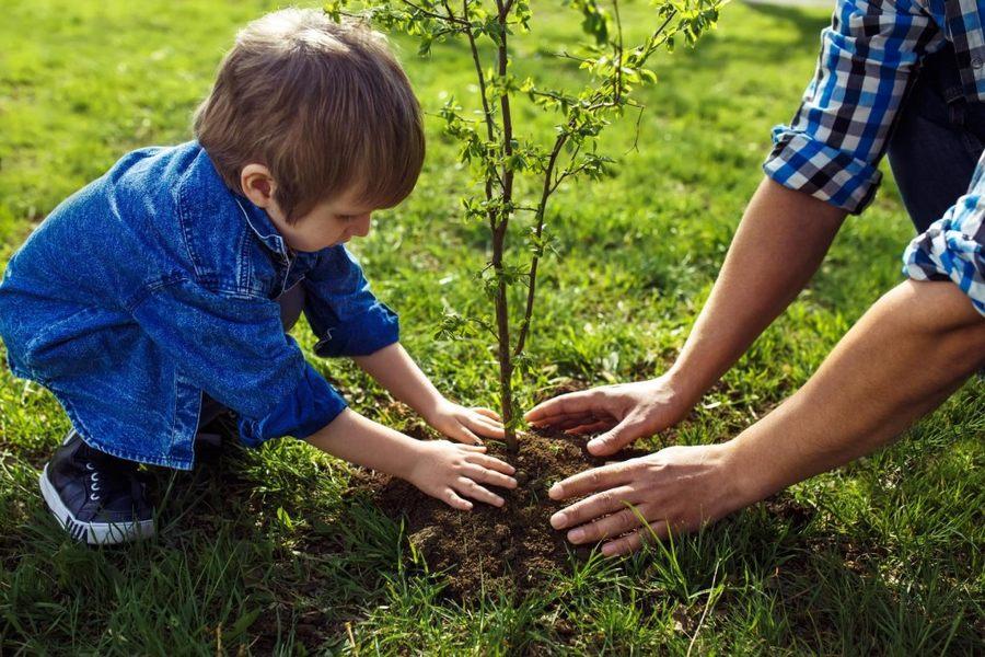 Весенняя посадка деревьев и кустарников: сроки + секреты сажания