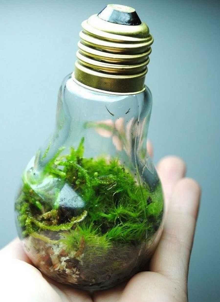 Вечный террариум из лампочки: как в лампочке посадить растение