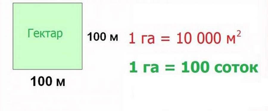 Сотка земли: сколько в метрах, как рассчитать площадь участка + таблица