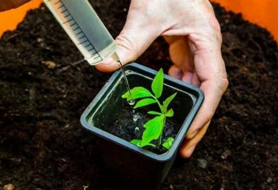 Как поливать рассаду правильно в домашних условиях, в теплице и грунте + вода для правильного полива