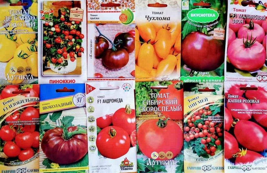 Посадка помидор в теплицу: подготовка почвы, возраст рассады, сроки, особенности + фото