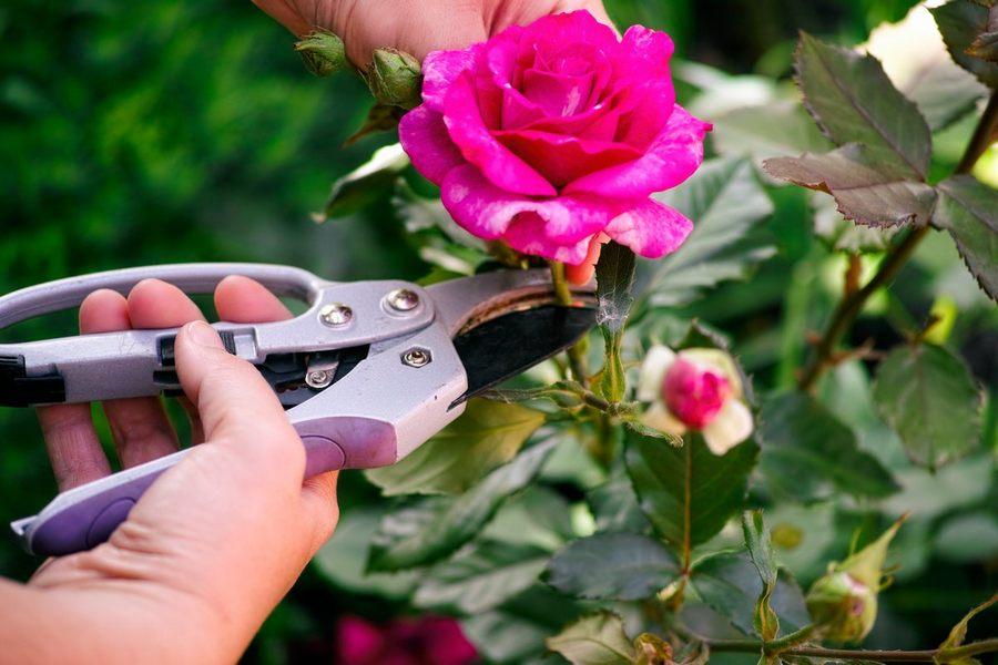 Как выбрать садовый секатор садоводу-новичку: обзор моделей + фото